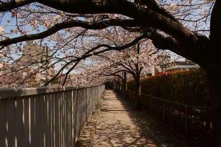 仙台堀川公園.jpg